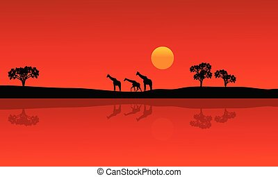 Silhouette of giraffe with red backgrounds