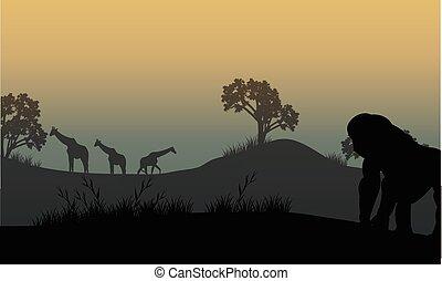 Silhouette of gorilla and giraffe