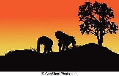 silhouette of gorilla in fields