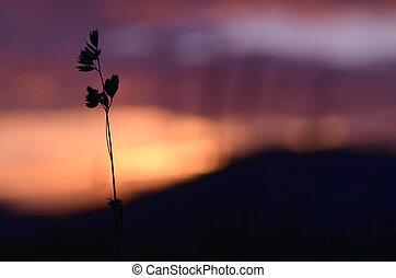 Silhouette of grass at orange sunset sky