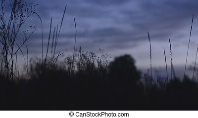 Silhouette of grass at sunset. Motorized dolly shot
