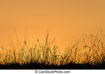 silhouette of grass blades