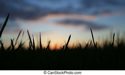 Silhouette of grass swaying in the wind