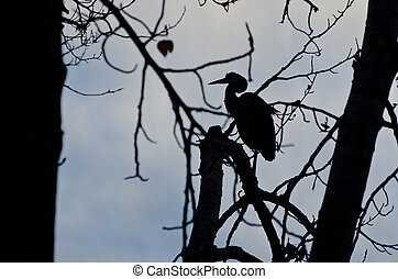 Silhouette of Great Blue Heron Perched in a Tree