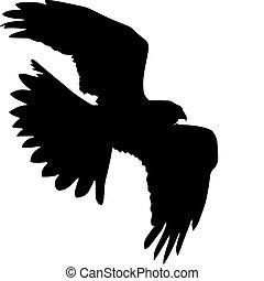 silhouette of harrier