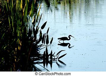 Silhouette of heron in water.