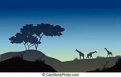 Silhouette of hills and giraffe