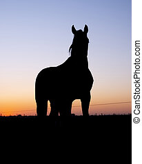silhouette of horse in meadow against colorful setting sun