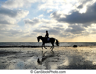 Silhouette of Female Horse Rider Galloping on the Sandy Beach with Reflection of the Sky