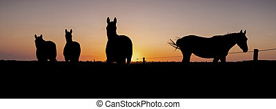 silhouette of horses in meadow against colorful sky at sunset
