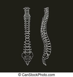 Silhouette of Human spine isolated on the black background