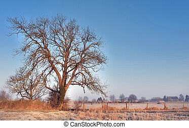 ash in winter