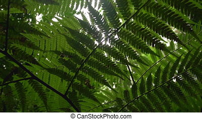 Silhouette of leaves and forest trees - A medium shot of...