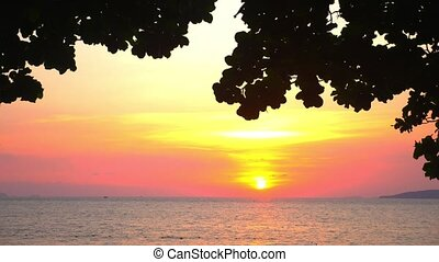 Silhouette of leaves of a large tree against a bright sunset...