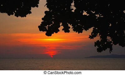 Silhouette of leaves of a large tree against a bright sunset over the sea. time lapse