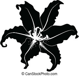 Silhouette of lily - Decorative vector lily silhouette in...