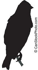 linnet - silhouette of linnet