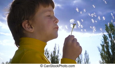 Silhouette of Little boy blowing up the dandelion -...