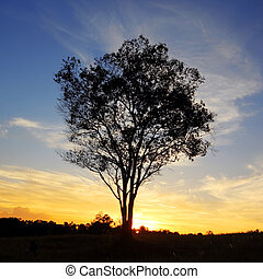 silhouette of lonely tree at sunset