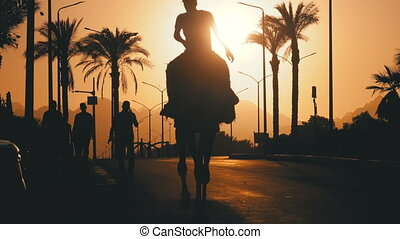 Silhouette of Man on Camel moving along the Road in City into the Sunset. Egypt. Slow Motion