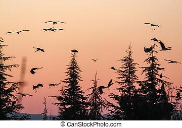 Silhouette of marabou stork at sunset