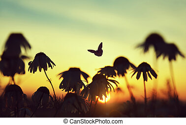 Silhouette of marguerite daisies with butterfly and ladybug on meadow at sunset