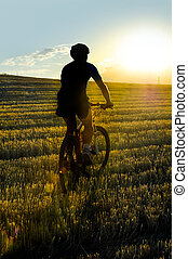 mountain bike rider riding through beautiful straw field against  burning summer sun at sunset
