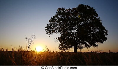 Silhouette of old maple against autumnal sunrise - Scenic...