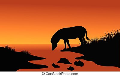 Silhouette of one zebra in riverbank