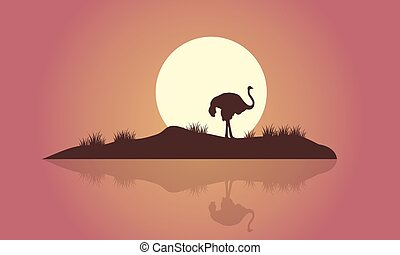 Silhouette of Ostrich scenery with reflection