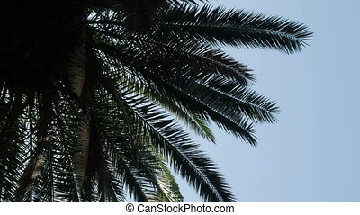 silhouette of palm branches against the sky