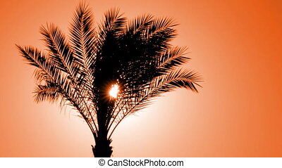 silhouette of palm tree against setting sun