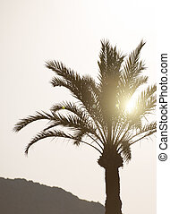 Silhouette of palm tree at sunset.