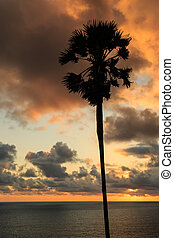 silhouette of palm tree at sunset time