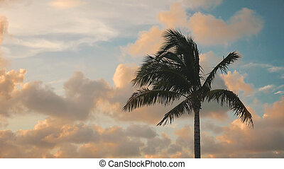 Silhouette of Palm Tree Blowing in Wind Against Clouds and Sky in Key West, Florida