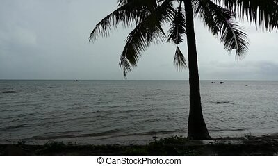 Silhouette of palm tree on the ocea