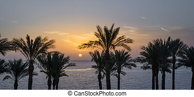 silhouette of palm trees against the dawn sky and blue sea