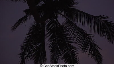 silhouette of palm trees against the sky at sunset