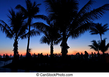 Silhouette of palm trees and people on Cable beach Broome Kimberley Western Australia