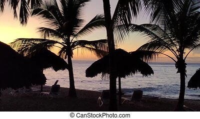 Silhouette of palm trees at sunset 2