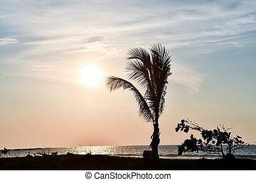 silhouette of palm trees at sunset, photo as a background