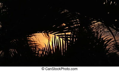 silhouette of palm trees gently blowing in the wind at sunset, mexico