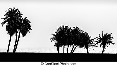 silhouette of palm trees on the Red Sea in Egypt