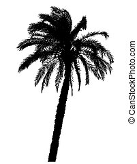silhouette of palm trees realistic illustration isolated on white background