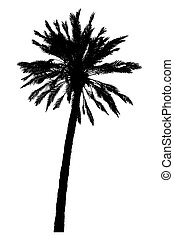 silhouette of palm trees realistic vector illustration
