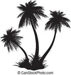 Silhouette of palms.