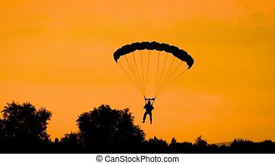Silhouette of parachutist flying on parachute in golden sky during sunset in summer.