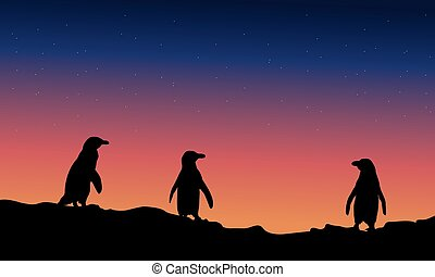 Silhouette of penguin at night landscape