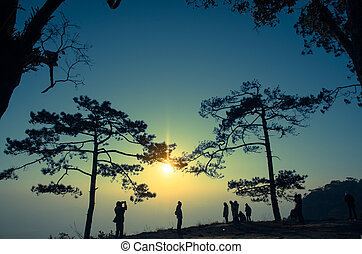 Silhouette of Pine Tree and Sunset