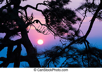 silhouette of pine tree at twilight